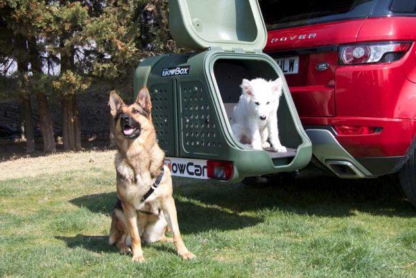 Towbox Verde V2 Dog