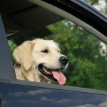 Viajar con perros: consejos de transporte